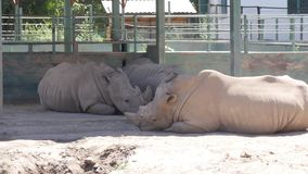 Rinoceros in de dierentuin stock afbeeldingen