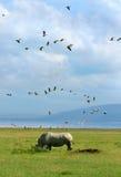 Rinoceros in de wildernis Royalty-vrije Stock Afbeelding