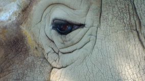 Rinoceros dichte omhooggaand