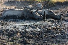 Rinoceros die in de modderpool liggen royalty-vrije stock fotografie