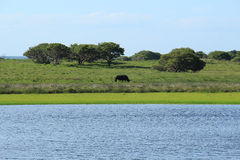 Rinoceros die in de savanne lopen Royalty-vrije Stock Foto's