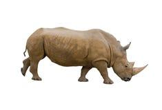 Rinoceros die op wit wordt geïsoleerdb Stock Fotografie