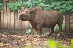 rinoceros in dierentuin Stock Afbeelding