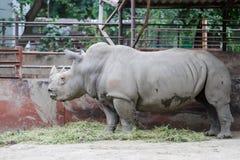 Rinoceros in een dierentuin Stock Fotografie