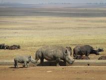 Rinoceros en haar baby Royalty-vrije Stock Foto