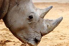 Rinoceros hoofd dichte omhooggaand in dierentuin in Beieren royalty-vrije stock fotografie