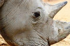 Rinoceros hoofd dichte omhooggaand in dierentuin in Duitsland in Augsburg royalty-vrije stock afbeelding