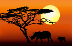 Rinoceros met kalfssilhouet Stock Foto's