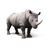Rinoceros op een witte achtergrond wordt geïsoleerd die Stock Foto