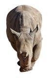 Rinoceros op Witte Achtergrond Royalty-vrije Stock Fotografie