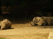 rinocerossen Royalty-vrije Stock Afbeeldingen