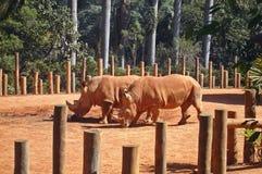 rinocerossen Royalty-vrije Stock Fotografie
