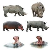 Rinocerossen en hippos Stock Foto