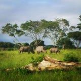 Rinocerossen het eten Stock Foto's