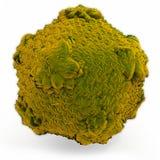 Rinovirus Imágenes de archivo libres de regalías