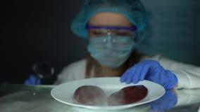 Rins de exame dos suínos do assistente de laboratório com lupa, qualidade nutritiva filme