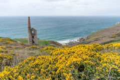 Rinsey head in cornwall england uk Royalty Free Stock Photography
