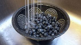 Rinsing blueberries. In a colander Stock Photography