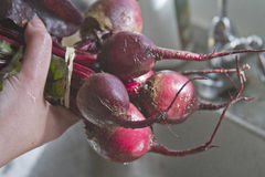 Rinsing a Bunch of Beets Royalty Free Stock Image