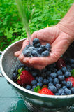 Rinsing Fresh Berries. Washing off fresh picked blueberries and strawberries by the handful under clean running water Stock Image