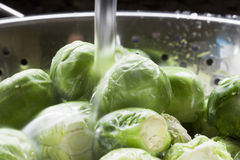 Rinsing Sprouts Stock Image