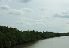 Rio alinhado árvore Foto de Stock Royalty Free