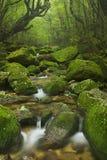 Rio ao longo da fuga de Shiratani Unsuikyo em Yakushima, Japão Imagens de Stock