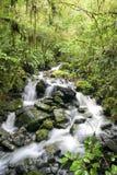 Rio através do pantanal Fotos de Stock