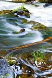 Rio através das madeiras Imagem de Stock Royalty Free