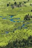 Rio azul através dos pantanais da grama imagem de stock royalty free