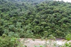 Rio Belize de Macal fotos de stock royalty free