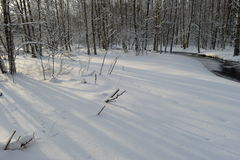 Rio branco da floresta da costa da neve com sombras das árvores no amanhecer Foto de Stock Royalty Free