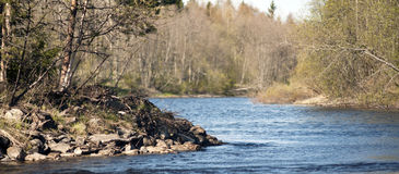 Rio calmo na mola Fotografia de Stock Royalty Free