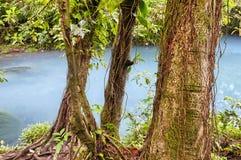 Rio Celeste azul vivo Fotos de archivo