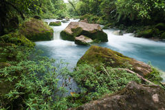 Rio Celeste flod nära Bijagua, Costa Rica fotografering för bildbyråer