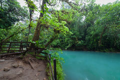Rio celeste and lush rainforest. At Tenorio national park Costa Rica Royalty Free Stock Photos
