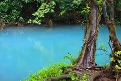 Rio celeste and vegetation. Rio celeste and lush vegetation at Tenorio national park Costa Rica Royalty Free Stock Photography
