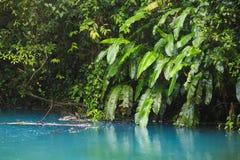 Rio celeste and vegetation. Rio celeste and lush vegetation at Tenorio national park Costa Rica Stock Photos