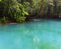 Rio celeste and vegetation. Rio celeste and lush vegetation at Tenorio national park Costa Rica Royalty Free Stock Photo