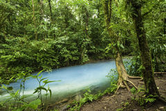 Rio Celeste Waters. Chemicals contained within the waters of two rivers react to create the vivid blue color of Rio Celeste in Costa Rica Stock Photography