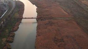 Rio coberto de vegetação com os juncos Nivelando o tiro aéreo video estoque