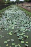Rio com água Lillies Fotos de Stock Royalty Free