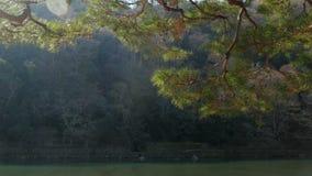 Rio com árvore video estoque