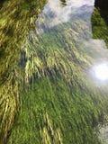 Rio com alga Imagem de Stock