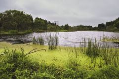 Rio com grama e lentilha-d'água Imagem de Stock