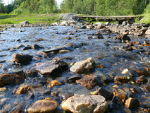 Rio conífero da montanha da floresta Imagem de Stock Royalty Free