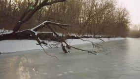 Rio congelado com árvore caída vídeos de arquivo