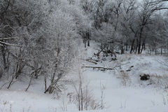 Rio congelado do inverno com geada Imagem de Stock Royalty Free