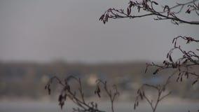 Rio congelado inverno e bancos cobertos com a neve vídeos de arquivo