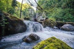 Rio da cachoeira da montanha com paisagem profunda da floresta Fotos de Stock Royalty Free